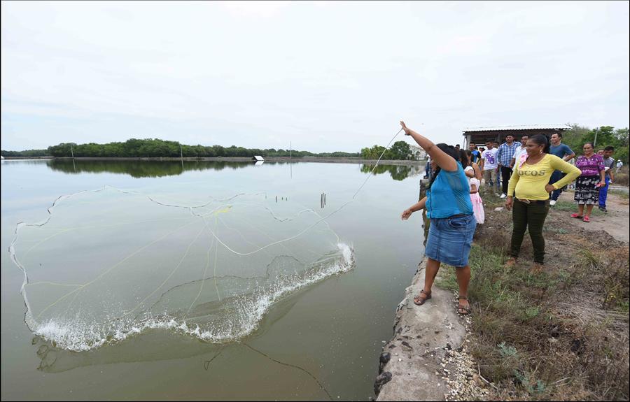 MOP inicia Fase II de mejora y limpieza de estanques de producción de camarón marino, en Usulután, La Paz y La Unión